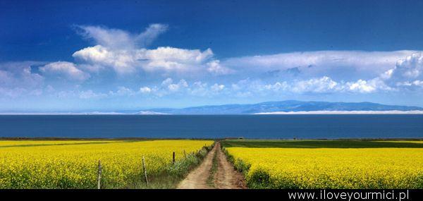 the_road__qinghai_lake___china